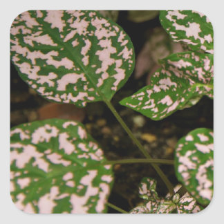 Stickers - Pink Polka Dot Plant