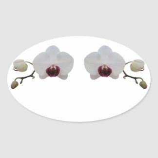Stickers - Ruby-Lipped White Orchid