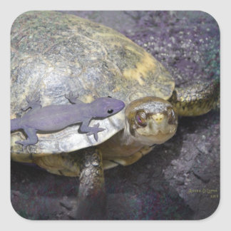 Stickers - Share The Journey, Turtle and Gecko