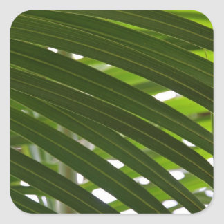 Stickers - Spindle Palm