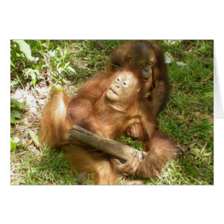 Sticks and Stones Apes Tickle Play in Borneo Cards