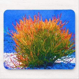 Sticks on Fire Succulent by Amy Vangsgard Mousepads