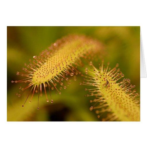 Sticky Plant Card