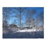 Sticky Snow 106 ~ postcard