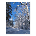 Sticky Snow 35 ~ postcard