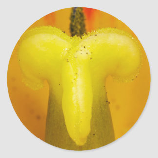 Stigma of a Yellow Tulip Classic Round Sticker