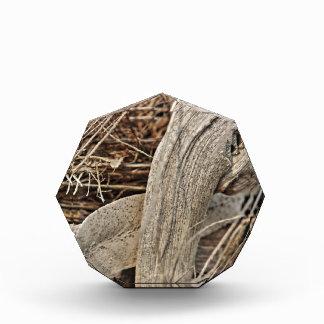 Still life in palm bark by Christine Bässler Award