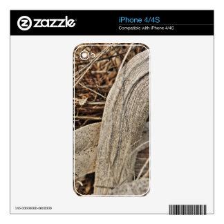 Still life in palm bark by Christine Bässler Skin For iPhone 4