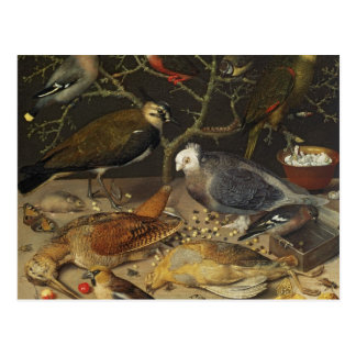 Still Life of Birds and Insects, 1637 Postcard