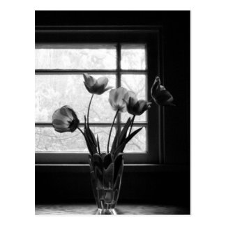 Still Life: Spring Tulips in Shadow Postcard