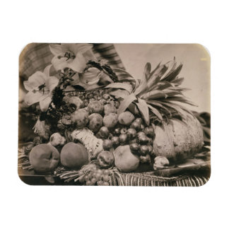 Still Life with Fruit, 1860 (sepia photo) Magnets