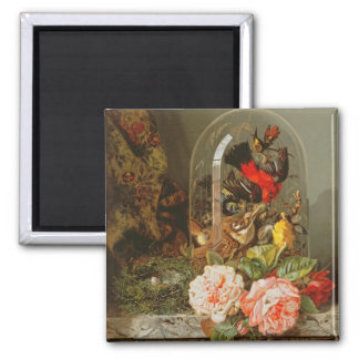 Still Life with Humming Bird in a Glass Dome Magnet