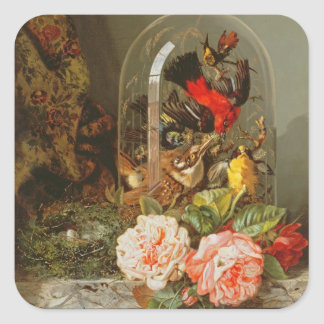 Still Life with Humming Bird in a Glass Dome Square Sticker