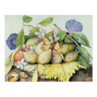 Still life with Plums, Walnuts and Jasmine (w/c on Postcard