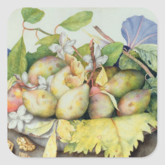 Still life with Plums, Walnuts and Jasmine (w/c on Square Sticker