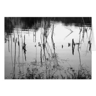 Still Water Greeting Cards