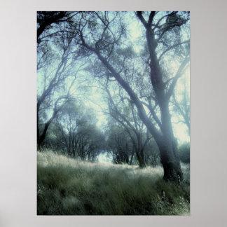 Still Woods Poster
