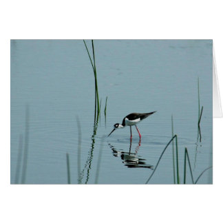 Stilt Reflection Card