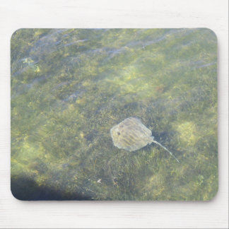 Sting Ray in the Keys Mouse Pad