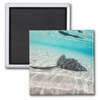 Sting ray 2 inch square magnet