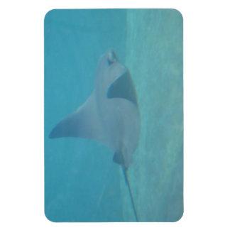 Sting Ray Rectangular Photo Magnet