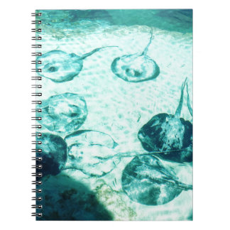 Sting rays in Xcaret - Mexico Notebook