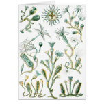 stinging-celled animals greeting card