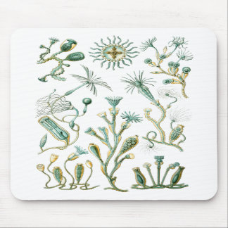 stinging-celled animals mousepads