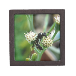 Stinging Insect and succulent plant Keepsake Box
