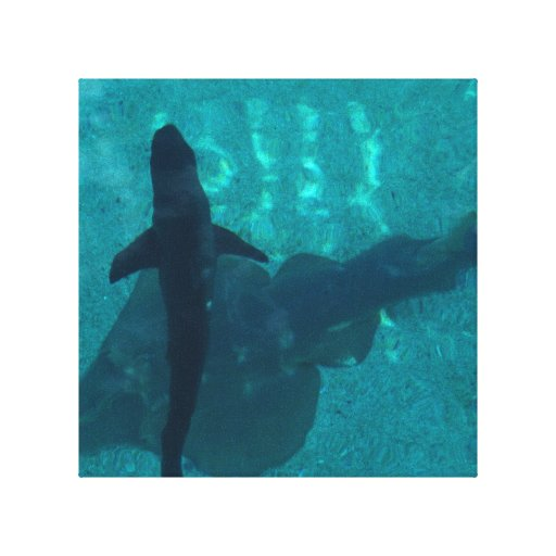 Stingray and Shark Gallery Wrapped Canvas