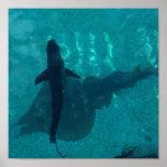 Stingray and Shark Print