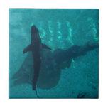 Stingray and Shark Tiles