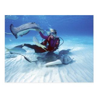 Stingray City, Grand Cayman, Cayman Islands, Postcard