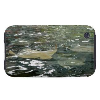 Stingray iPhone 3 Tough Cover