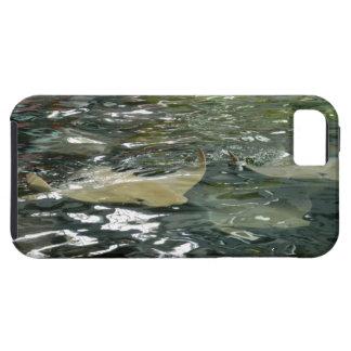 Stingray iPhone 5 Case