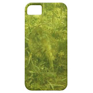 stingray iPhone 5 cases