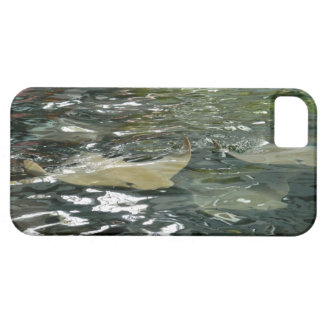 Stingray iPhone 5 Covers