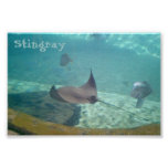 Stingray Print