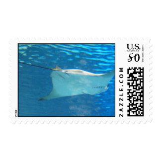 Stingray Swimming Postage Stamp