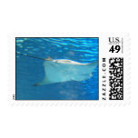 Stingray Swimming Postage Stamp