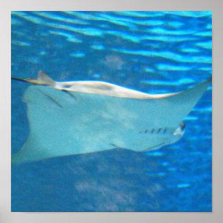 Stingray Swimming Poster