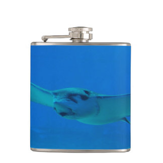 Stingray Swimming Under Water Flasks