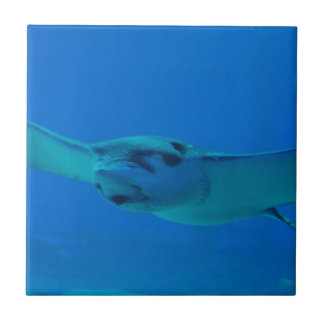 Stingray Swimming Under Water Tile