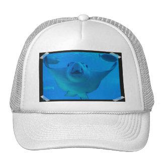 Stingray Underwater Baseball Hat