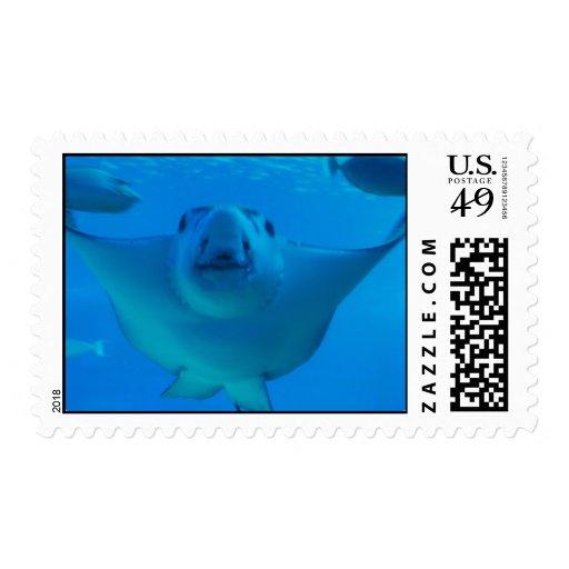 Stingray Underwater Postage Stamp