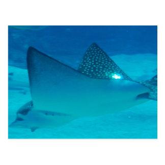 Stingray Underwater  Postcard