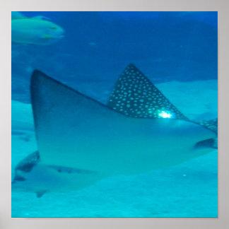 Stingray Underwater Poster