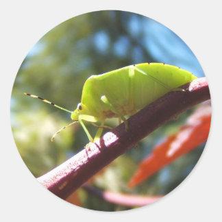 Stink bug 216 ~ sticker
