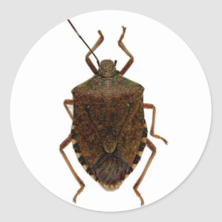 Stink Bug Classic Round Sticker