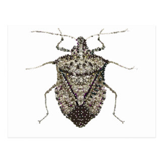 stink bug postcard